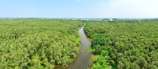 malalauca-forest-tanlap-longan-thebroadlife