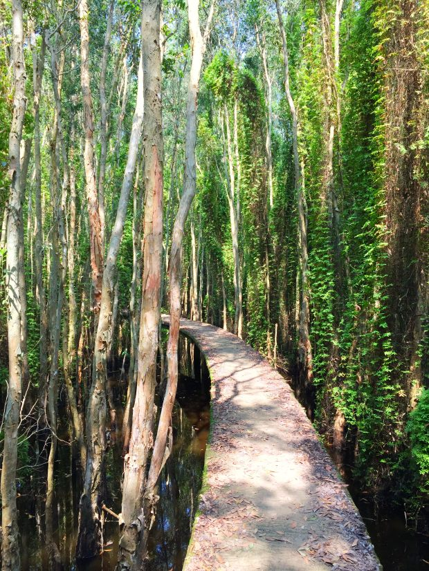 malalauca-forest-tree-tanlap-longan-vietnam-thebroadlife