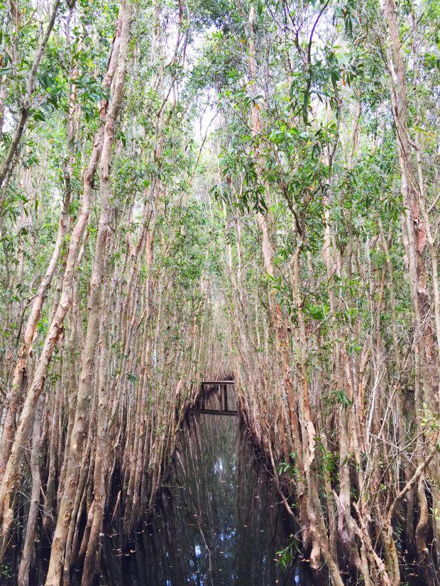 malalauca-tree-forest-tanlap-longan-vietnam