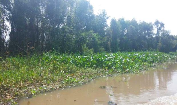 melaleuca-forest-thebroadlife-tanlap-longan-vietnam-canoe-river