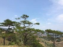 trees-tanang-phandung-thebroadlife-top-mountain-hill-travel-trekking