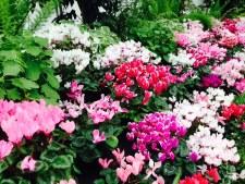 colors-Orchid-flowers-thebroadlife-travel-wander-hagleypark-newzealand