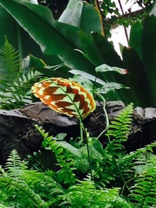 leaf-flower-thebroadlife-travel-wander-hagleypark-newzealand