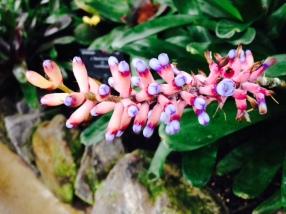pink-flower-thebroadlife-travel-wander-hagleypark-newzealand