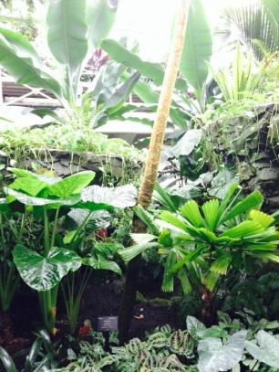 plants-trees-thebroadlife-travel-wanderlust-hagleypark-newzealand