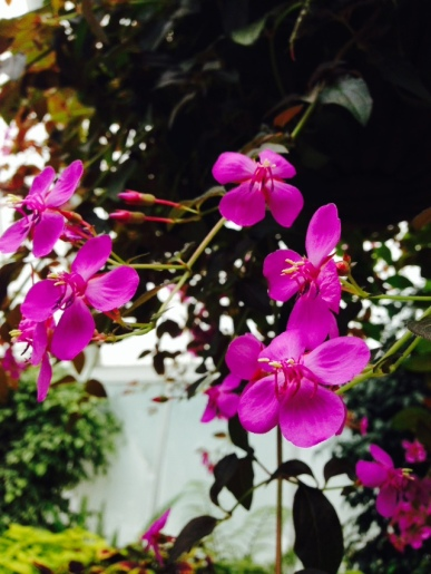 purple-orchid-flowers-thebroadlife-travel-wander-hagleypark-newzealand