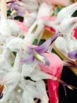 white-orchid-flower-thebroadlife-travel-wander-hagleypark-newzealand