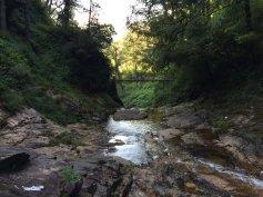 the Golden Stream